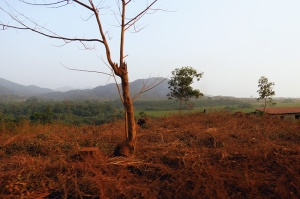 Ébola, Sierra Leone